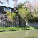 2017-04-13 photo 116